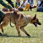 canine police unit drills with master