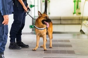 canine officer patrols train station